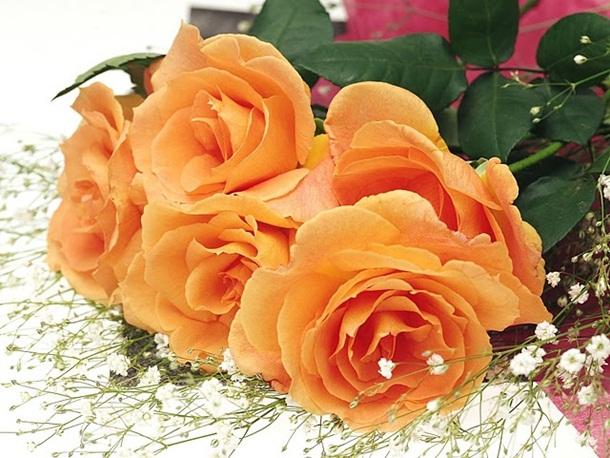 صور زهور برتقالي (4)