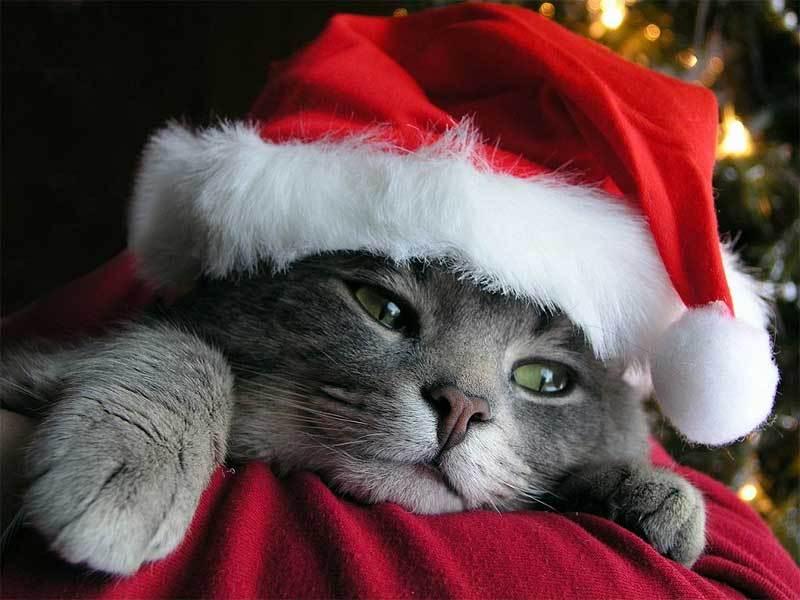 صور قطط ناعمة (3)
