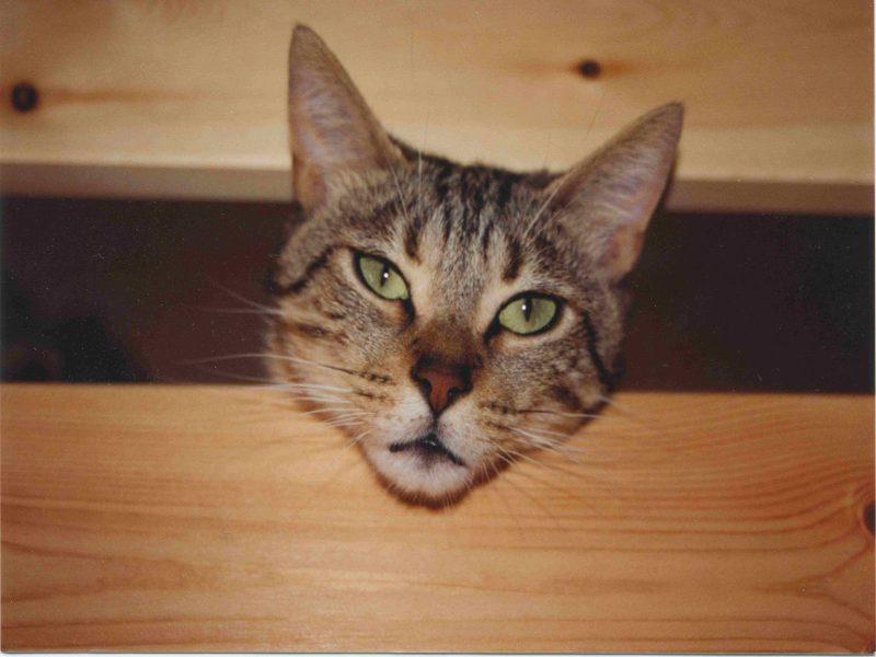 قطط ناعمة جدا (3)