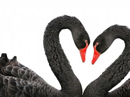 اجمل الصور الحب (4)