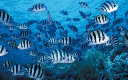 اجمل سمك زينة (1)
