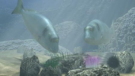 اجمل سمك زينة (2)
