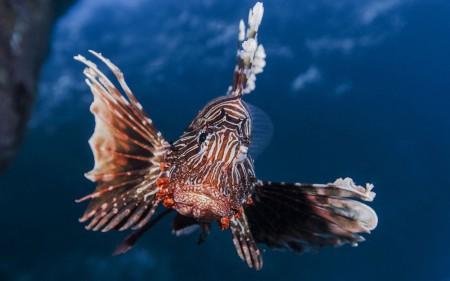 اجمل سمك زينة (4)