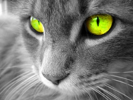 اجمل قطط 2016 (1)