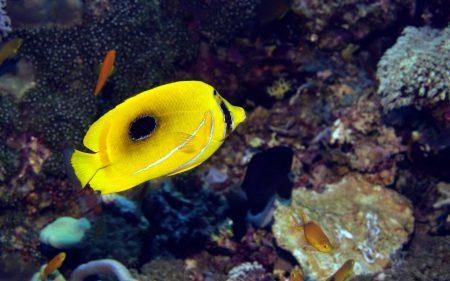 احلي صور سمك زينة (2)