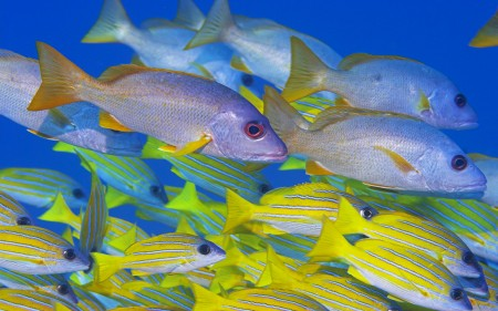 احلي صور سمك زينة (4)