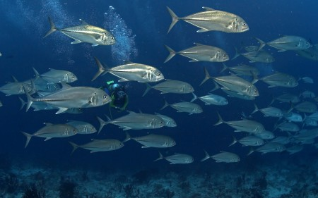 احلي صور سمك زينة (5)