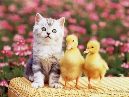 احلي قطط في العالم  (3)