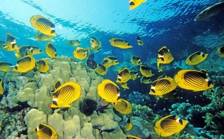 اشكال سمك زينة (1)