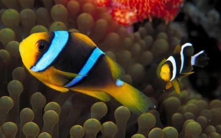 خلفيات سمك زينة (4)