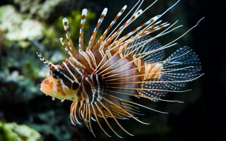 خلفيات سمك زينة (5)