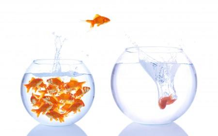 خلفيات سمك (3)