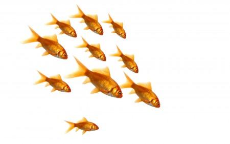 خلفيات سمك (5)
