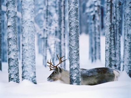 خلفيات عن الثلج (5)