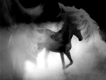 خلفيات فرس عربي اصيل وصور احصنة جميلة (3)