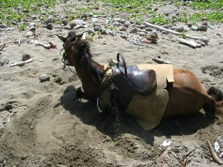 خلفيات فرس عربي اصيل وصور احصنة جميلة (5)