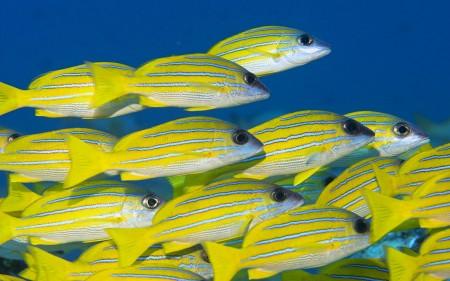 سمك زينة جميل بالصور احلي واجمل اسماك زينة (1)