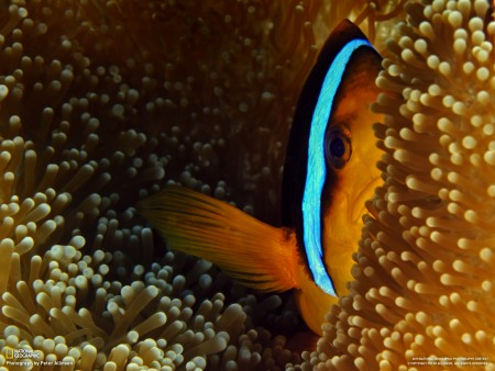 سمك زينة HD (3)