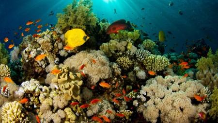 سمك زينة HD (4)