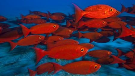 سمك زينة HD (5)