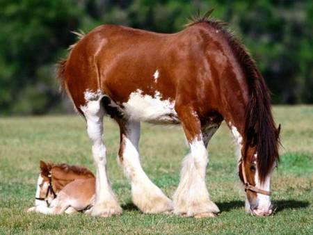 صور احصنة ملونة (4)