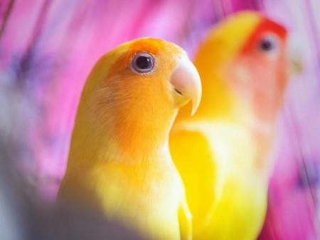 صور ببغاوات جميلة ملونة احلي الوان الببغاء (2)