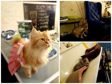 صور قطط حلوه  (1)