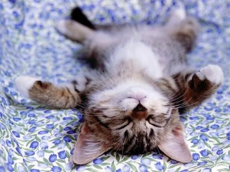 صور قطط حلوه  (2)