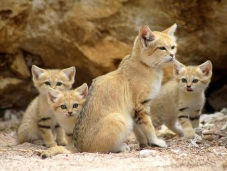 صور قطط حلوه  (4)