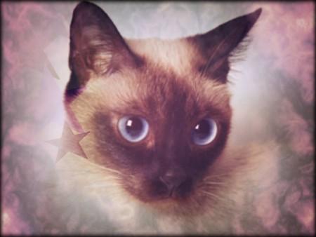 قطط حلوة (1)