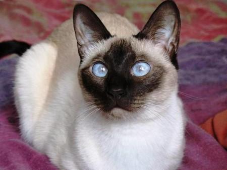 قطط حلوة (3)
