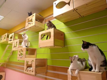 قطط روعة  (1)