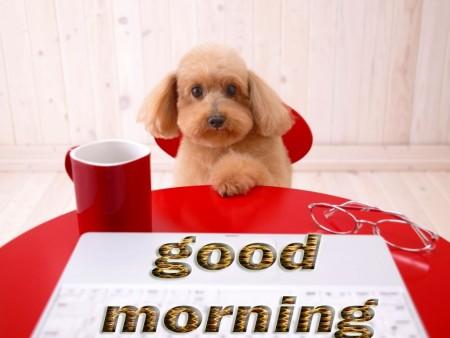 خلفيات صباح الخير (1)