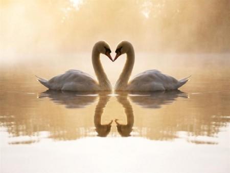 صور حب رائعة جديدة  (1)