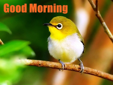 صور صباح للفيس بوك وتويتر (5)
