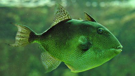 خلفيات واشكال سمك زينة HD (2)