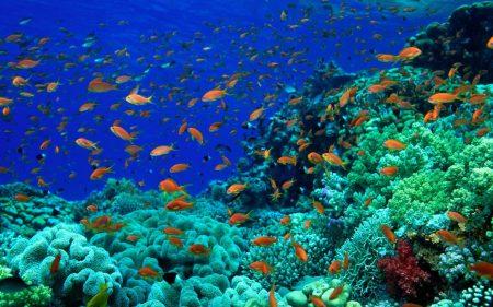 صور سمك زينة  (1)