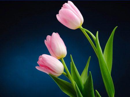 اجمل زهرة  (3)