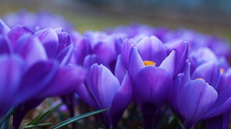 زهرة البنفسج فيس بوك  (3)