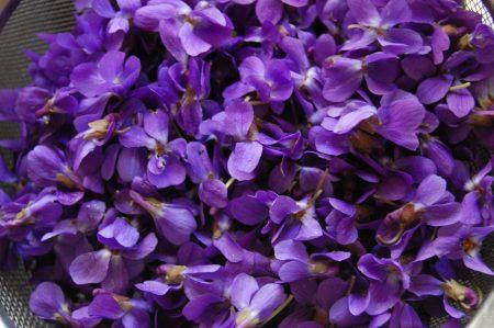 صور خلفيات ورمزيات وردة البنفسج (3)