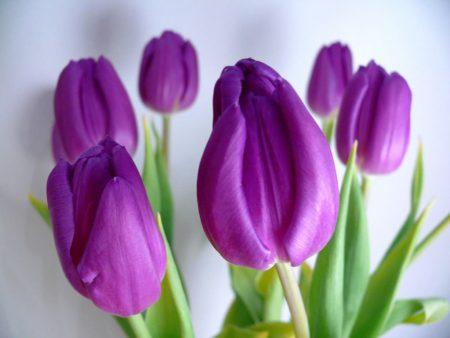 صور زهرة البنفسج احلي خلفيات ورمزيات ورد بنفسج (2)