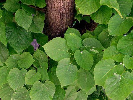 اجمل صور اوراق الشجر (1)