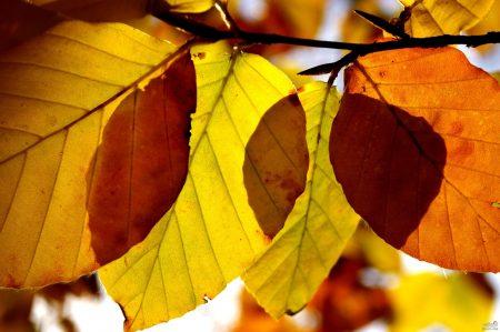 اجمل ورق شجر 2017 فصل الخريف (1)