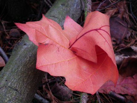 اجمل ورق شجر 2017 فصل الخريف (2)