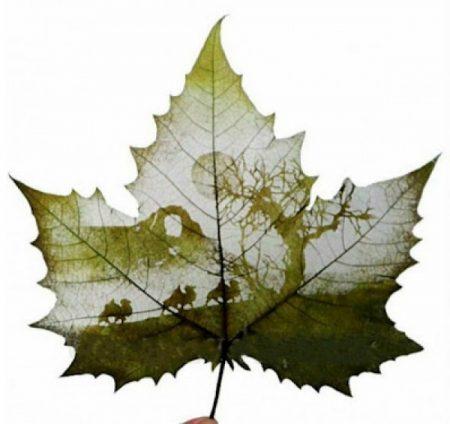 احلي واجمل ورق اشجار (2)