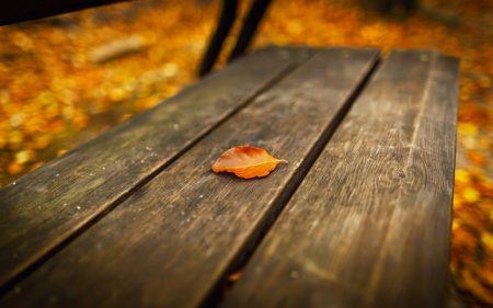 صور اوراق الشجر خلفيات عن فصل الخريف 2017 (1)