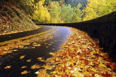 صور فصل الخريف (1)