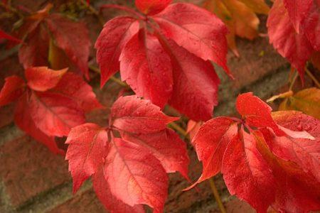 صور فصل الخريف (2)