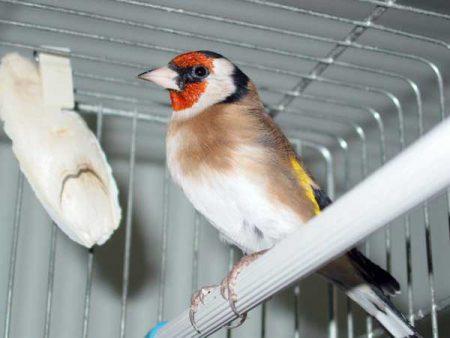 طيور (2)