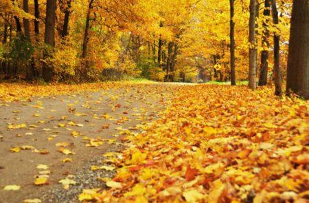 ورق شجر متساقط فصل الخريف بالصور (2)